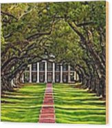 Oak Alley Wood Print by Steve Harrington