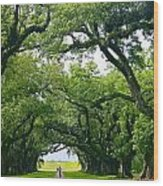 Oak Alley Trees Wood Print