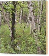 Oak And Birch Wood Print