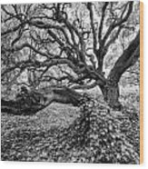 Oak And Ivy Bw Wood Print