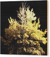 Oak At Night Wood Print
