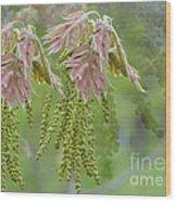 Oak Blossoms Wood Print