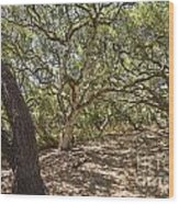Oak Forest - The Magical And Mysterious Trees Of The Los Osos Oak Reserve Wood Print