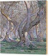 Oak Grove Wood Print