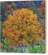 Oak In Autumn Color Wood Print