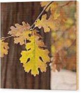 Oak Leaf Wood Print by Denice Breaux