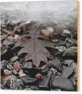Oak Leaf On A Winter's Day Wood Print by Steven Valkenberg