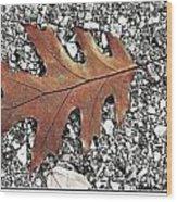 Oak Leaf On Asphalt  Wood Print