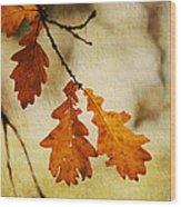 Oak Leaves At Autumn Wood Print