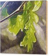 Oak Leaves Wood Print