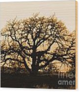 Oak Lit Wood Print