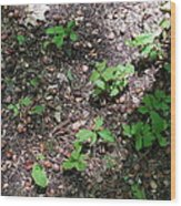 Oak Nursery Wood Print