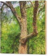 Oak On The Etowah Wood Print