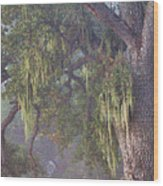 Oak Tree And Spanish Moss In The Mist Wood Print
