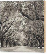 Oak Trees Of Charleston South Carolina In Sepia Wood Print