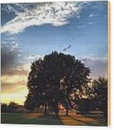 Oak Tree At The Magic Hour Wood Print