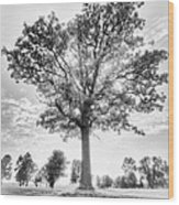 Oak Tree Bw Wood Print