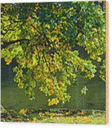 Oak Tree By The Pond - Featured 3 Wood Print