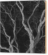 Oak Tree Canopy Under A Night Sky Wood Print