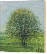 Oak Tree In Spring Wood Print