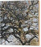 Oak Tree In Winter Wood Print