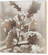 Oak Tree Leaves Frozen In Ice Wood Print