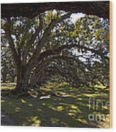 Oak Trees   #5794 Wood Print