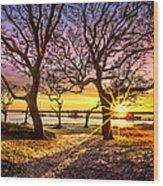 Oak Trees At Sunrise Wood Print