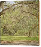 Oak Trees Draped With Spanish Moss Wood Print