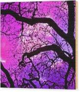 Oaks 17 Wood Print