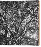Oak's Web Wood Print