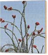 Ocatillo With Red Blossoms Wood Print
