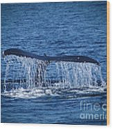 Ocean Dive Of The Humpback Whale Wood Print