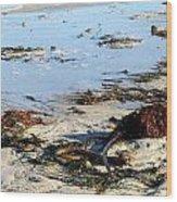 Ocean Life On The Beach Wood Print