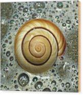 Ocean Shell Spiral Wood Print