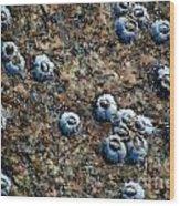 Ocean's Quilt Wood Print