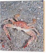 Ocellate Swimming Crab Wood Print