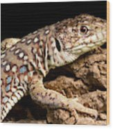 Ocellated Lizard Timon Lepidus Wood Print