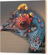Ocellated Turkey Portrait Wood Print