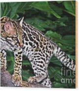 Ocelot Felis Pardalis Wildlife Rescue Wood Print