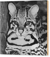 Ocelot In Repose Wood Print