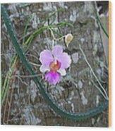 Ochid Wood Print