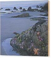 Ochre Sea Stars At Low Tide Miwok Beach Wood Print