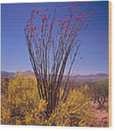 Ocotillo And Palo Verde Wood Print