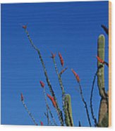 Ocotillo And Saguaro Wood Print