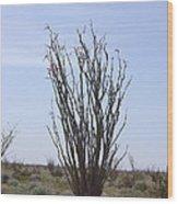 Ocotillo Cactus Wood Print