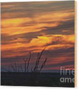 Ocotillo Sunset Wood Print by Robert Bales