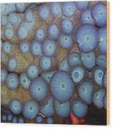Octo Circles Wood Print