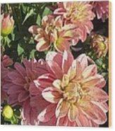October Dahlia Field Wood Print