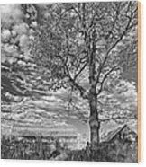 October Evening Monochrome Wood Print